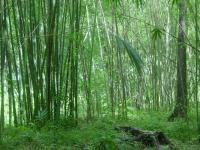 1734_1-terreno_con_bambu.JPG