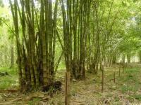 1734_6-bambu.JPG