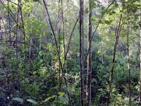 1973_1-bosque_en_crecimiento.jpg