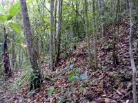 2310_4-forest.jpg