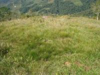 3267_pasture.JPG
