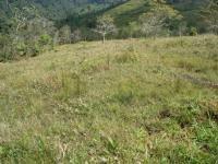 3267_pasture_(3).JPG