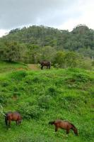 3309_8365_New-pasture-web.jpg