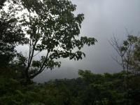 4761_portalon-rainy_forest_view.jpg