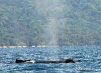 4979_whale.jpg
