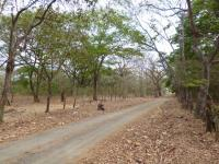 5819_6251_NH_0425-_Guana-_002.jpg