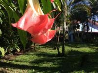 6264_490_16_jardin.JPG