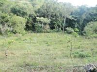 7695_1078_020-finca-445-nuevos_horizontespropiedades-San_Ramon-Alajuela-sevende-casa1.JPG